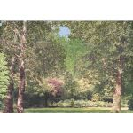 "PW1 Park Woodland Poster 10"" x 14"""